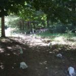 Arboretum de la Alfaguara