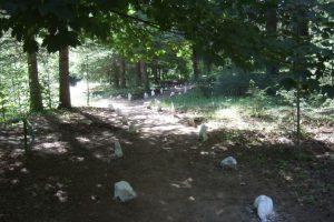 Arboretum «La Alfaguara»